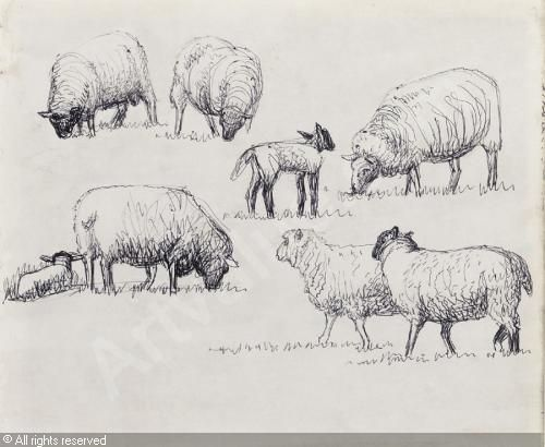 Line Drawing Images Of Sheep : Henry moore drawings of sheep seattle artist league