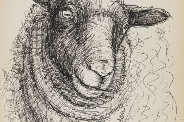 Line Drawing Of Sheep Face : Henry moore drawings of sheep seattle artist league