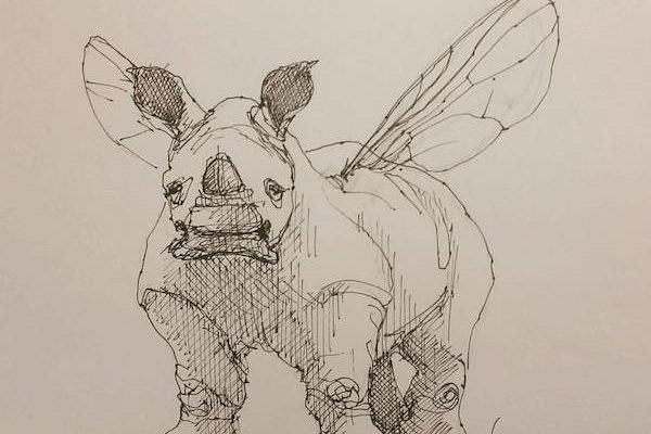 Baby Rhinoceros Fly