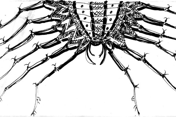 trans scan insect
